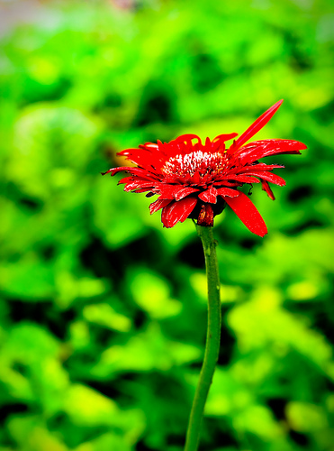 Stand_Out_Flower