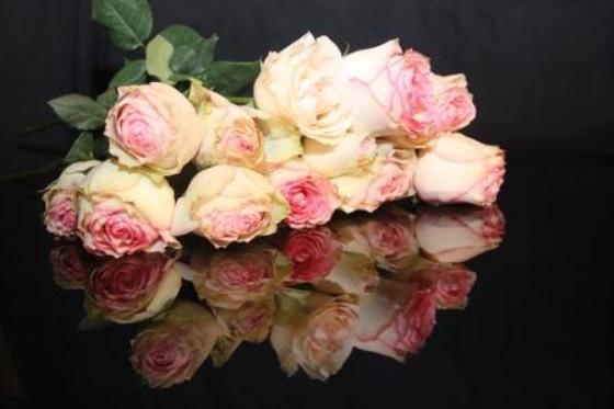 english-roses2