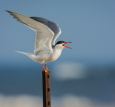 bird in a pole